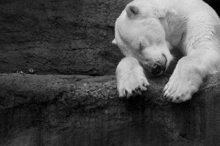 ¿Cuáles son los 12 animales en peligro de extinción en 2021?
