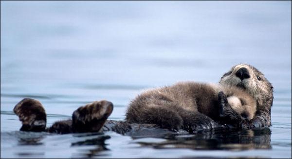 Mum_Baby_Otter_682_1001687a