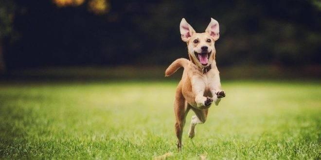 Con estos 7 consejos siempre entenderás lo que tu perro quiere decirte