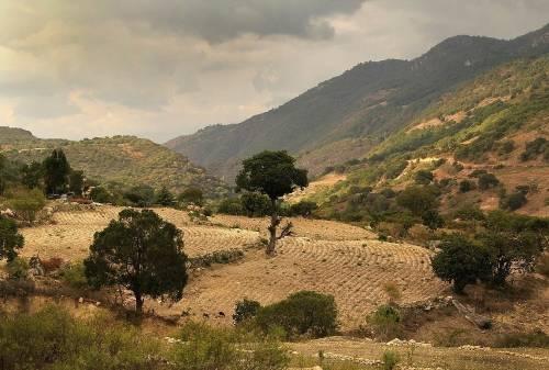 Los 7 proyectos de reforestación más impresionantes de la historia