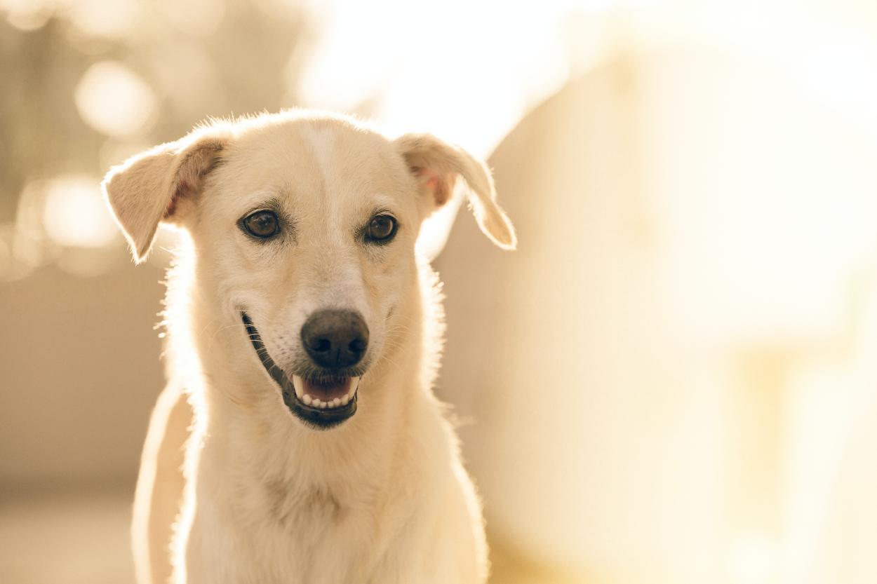 10 datos curiosos sobre los perros que probablemente no conocías