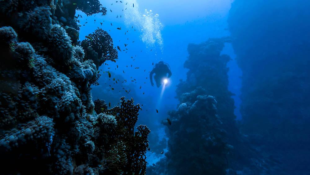 Descubren crustáceo en el fondo del mar con plástico en el estómago