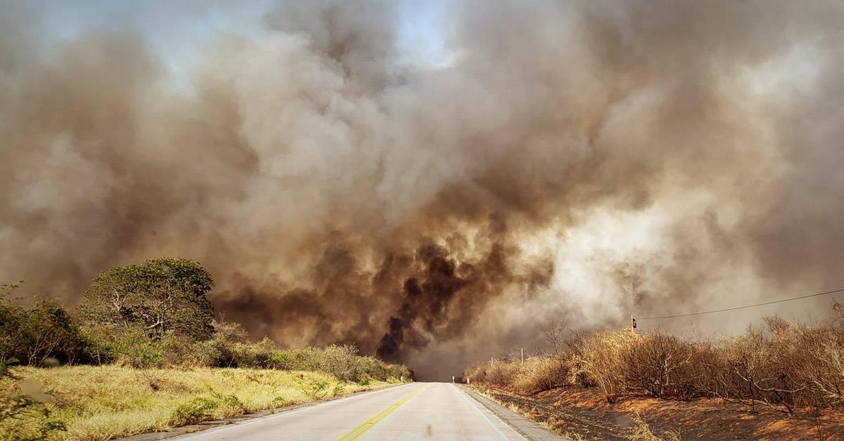 Los incendios forestales de Bolivia han consumido 5 millones de hectáreas y no s