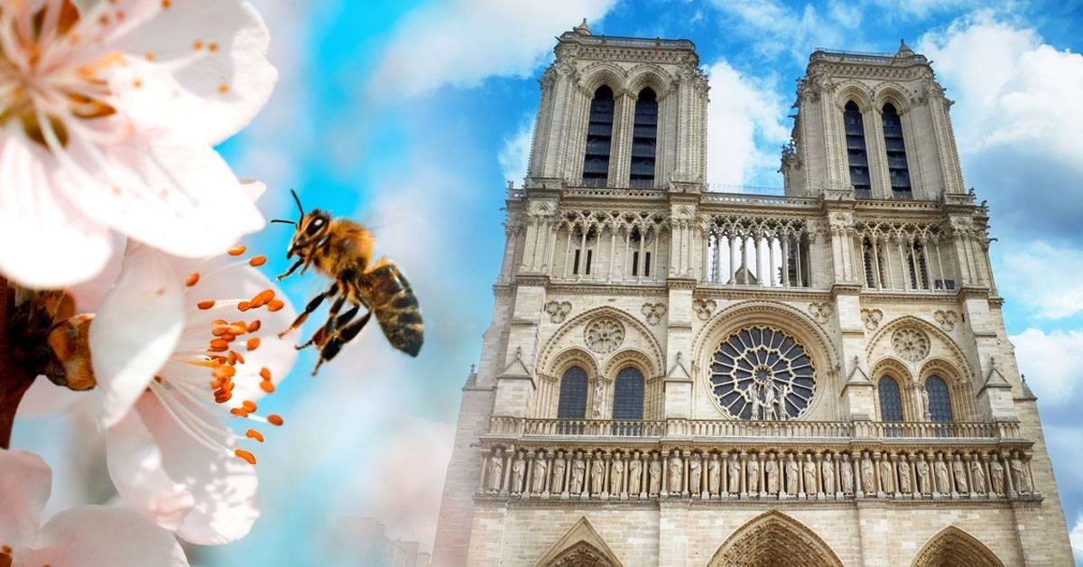Las abejas de Notre Dame sobrevivieron al incendio