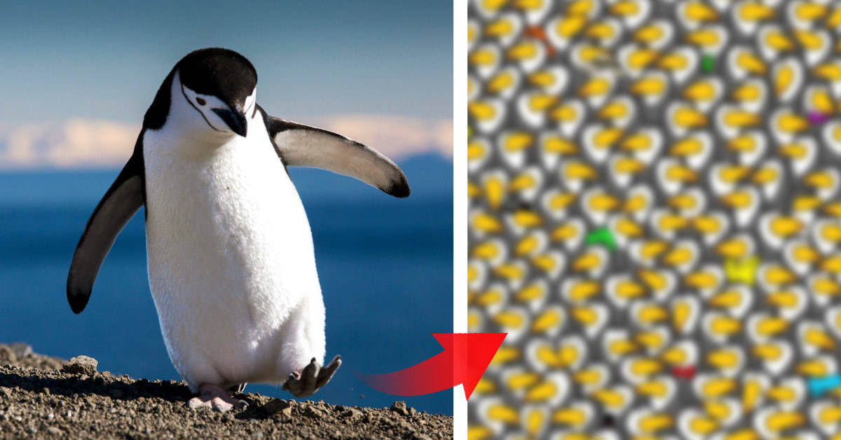 ¿Puedes encontrar el pingüino escondido entre los tucanes?