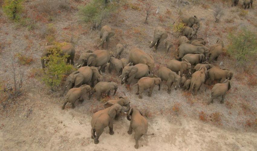 Los elefantes son los animales terrestres más grandes que existen en la actualidad