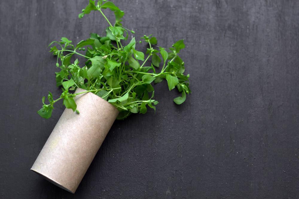Una alternativa al papel higiénico más amigable con el ambiente
