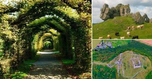Un bosque mágico en Irlanda