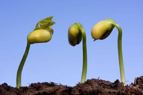 Cómo hacer germinar las semillas 3 veces más rápido