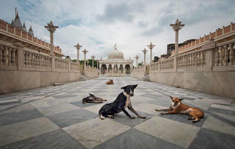 perros india
