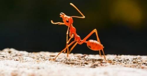 Descubren una hormiga que solo trabaja de noche para evitar el calor