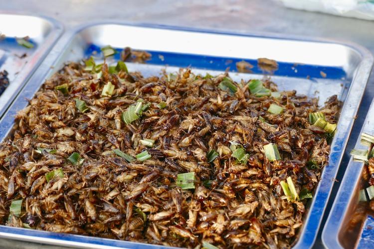 La ONU promueve que se coman insectos para salvar el planeta