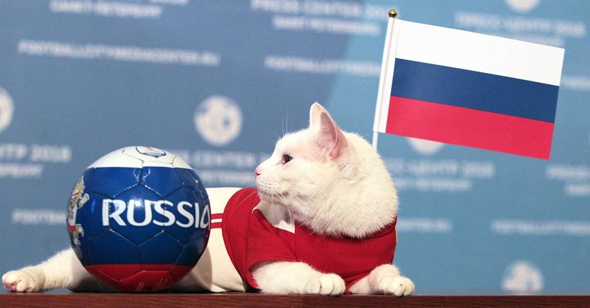 ¿El gato oráculo predijo finalmente quién ganará la copa del Mundial de Rusia?