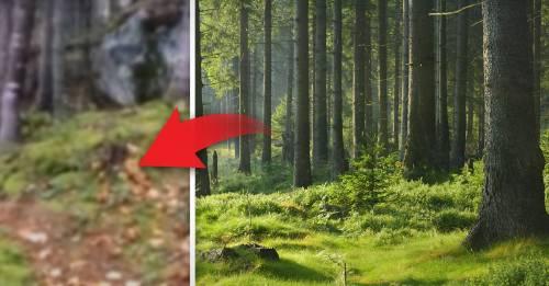 """¿Por qué el suelo de este bosque """"respira"""" como si estuviera vivo?"""