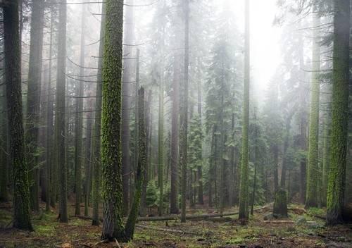 9 bosques alrededor del mundo que parecen encantados