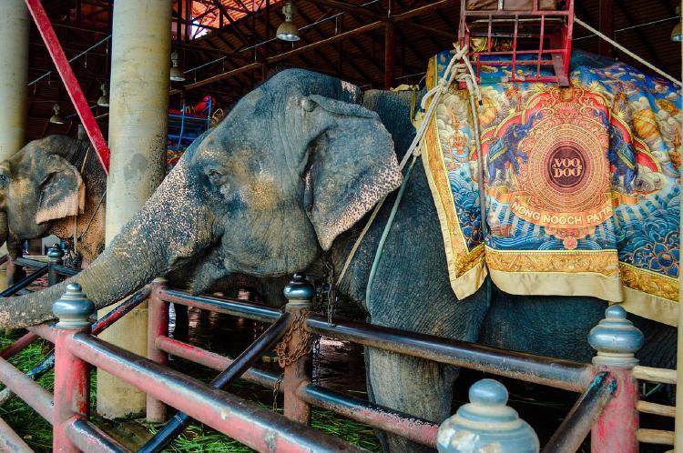 elefante circo2