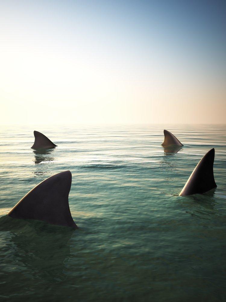 El genoma del tiburón puede ayudar a salvar vidas