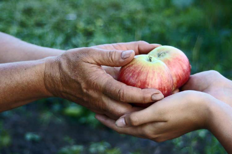 dar manzana