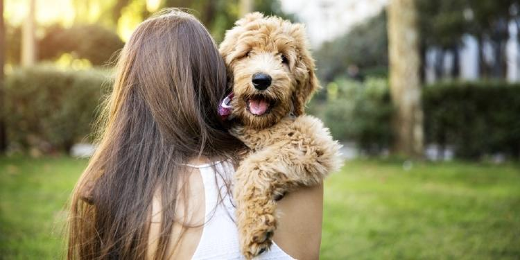 CuidaMiMascota, una plataforma en línea para encontrar un cuidador cualificado para tu mascota
