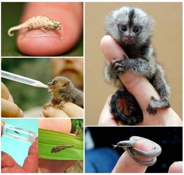 Los 10 animales más pequeños del mundo