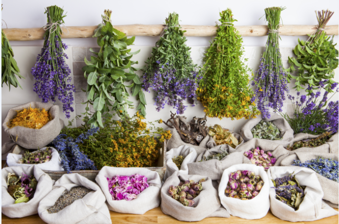 México, segundo país con mayor número de plantas medicinales