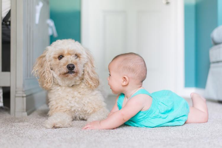 La relación de perros con bebés suele ser excelente