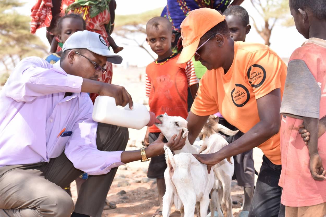 Celebramos 55 años de proteger a los animales en situaciones de desastres