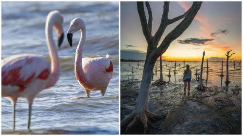 Un oasis para la biodiversidad: conocé el próximo Parque Nacional Ansenuza