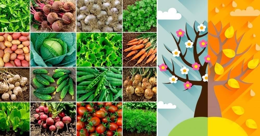 Qué te conviene plantar en octubre de acuerdo al hemisferio en el que te encu..