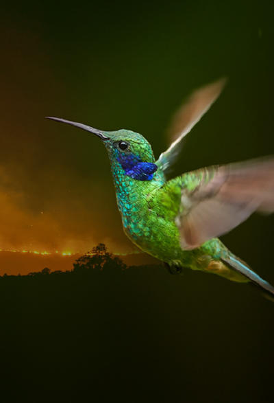 La parábola del colibrí