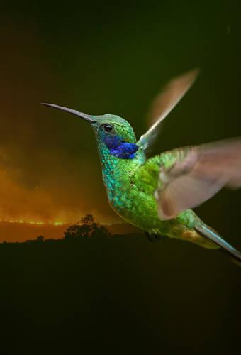 La parábola del colibrí, una bella enseñanza que no olvidarás