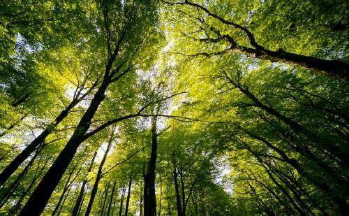 Un tercio de los árboles silvestres del mundo están al borde de la extinción