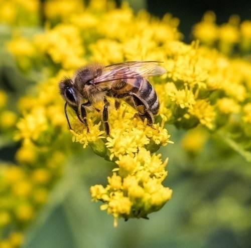 Mueren 2 mil colmenas por uso de agrotóxicos en Uruguay