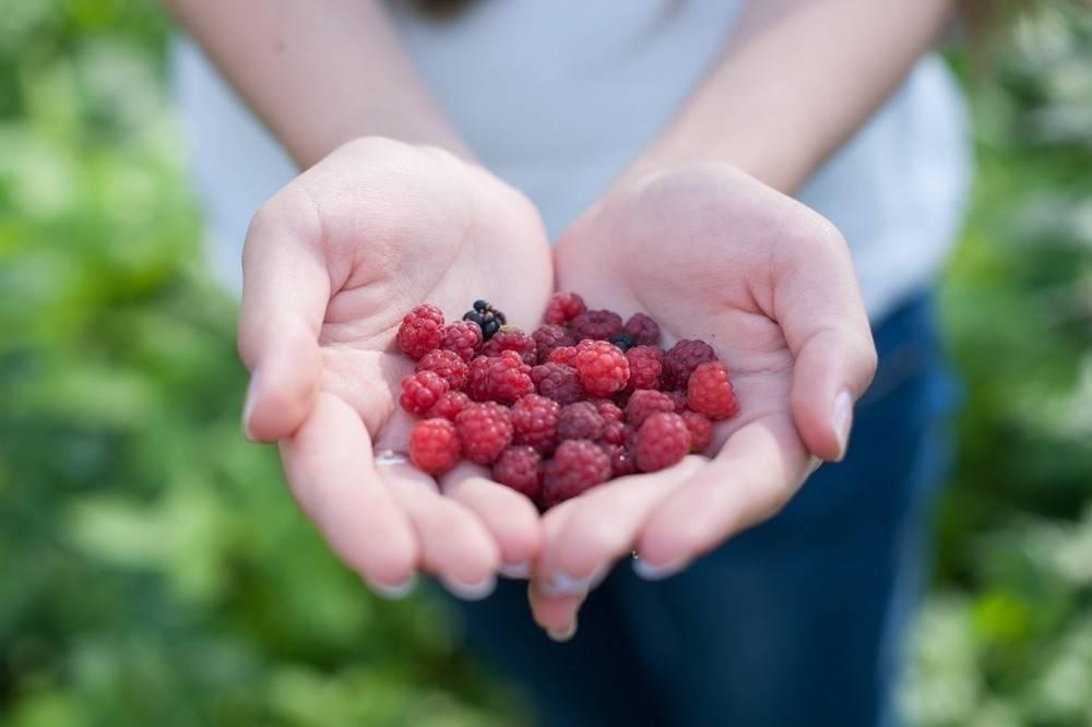 Cómo cultivar frutos rojos en tu hogar