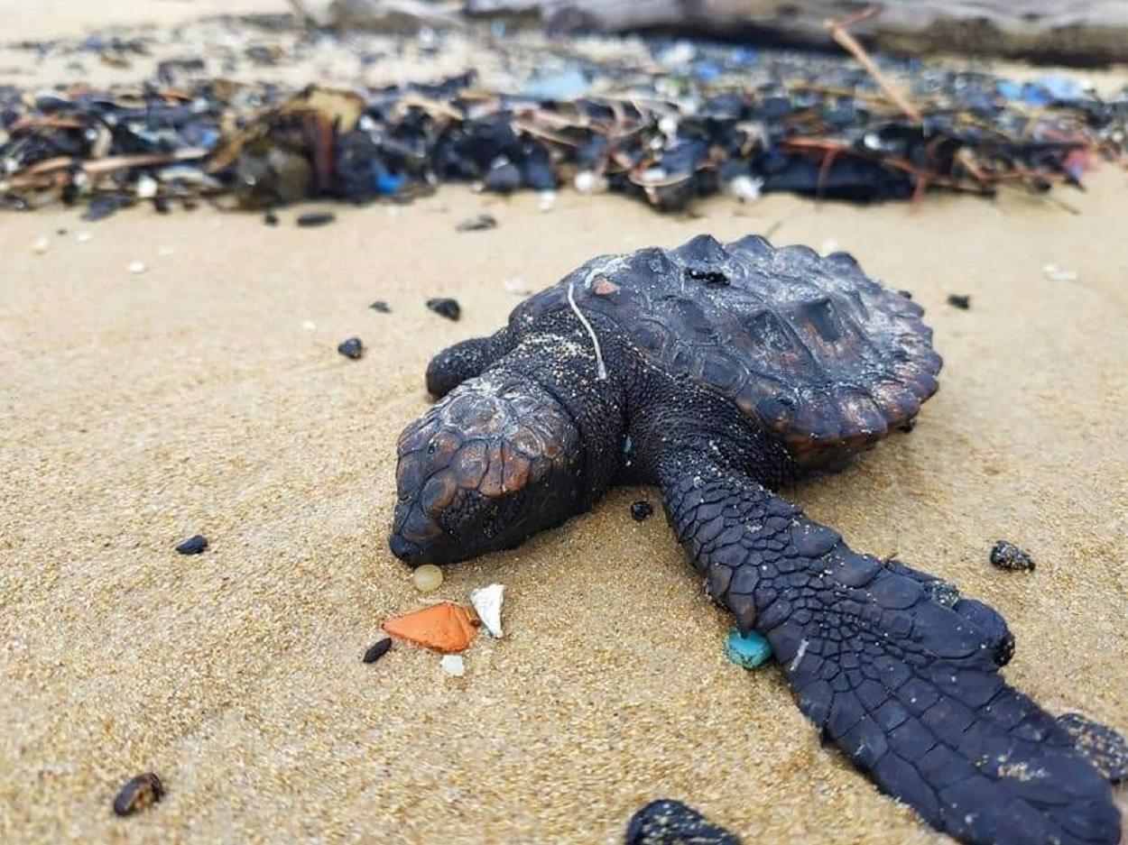 Israel cierra sus playas del Mar Mediterráneo por un derrame de petróleo