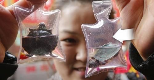 ¿Por qué estos llaveros son los recuerdos más caros del mundo?