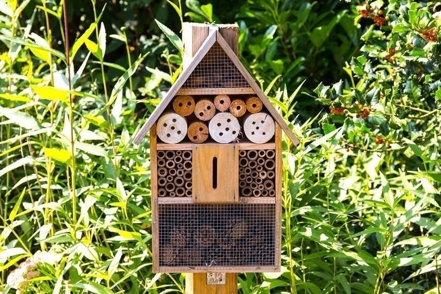 Construye un hotel ¡para abejas!