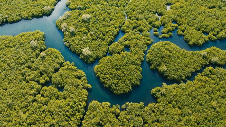 vista aerea de  bosque de manglares