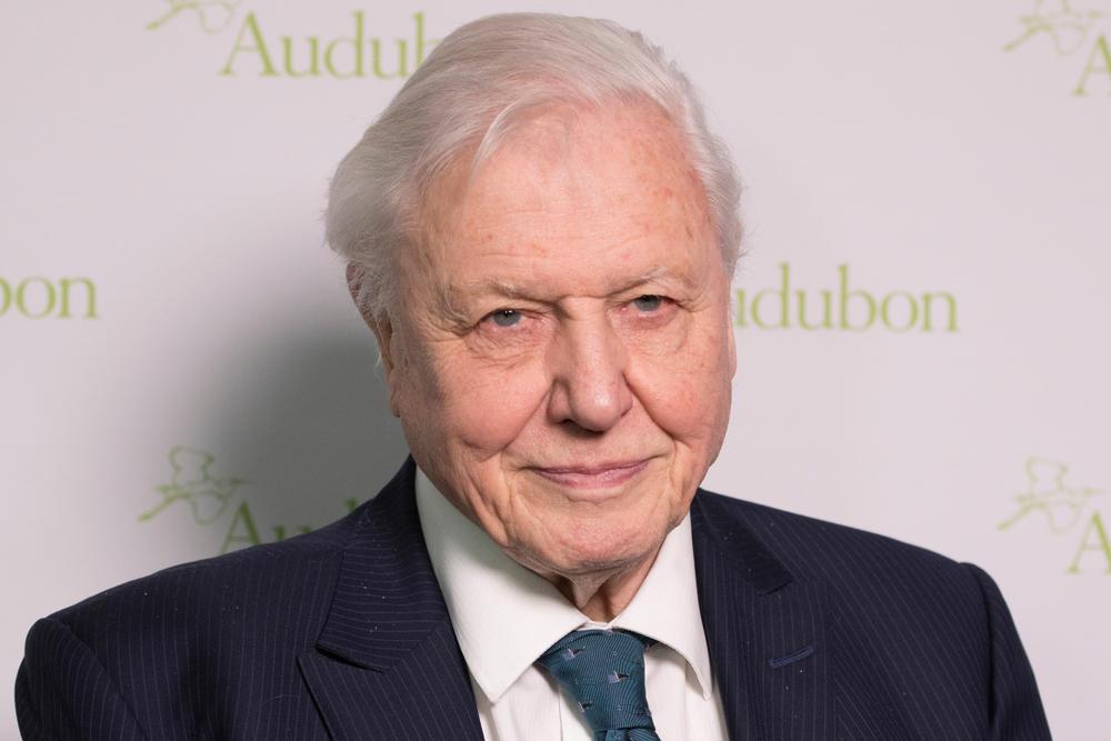 """David Attenborough califica la crisis climática como un """"crimen"""" que los seres humanos han cometido"""