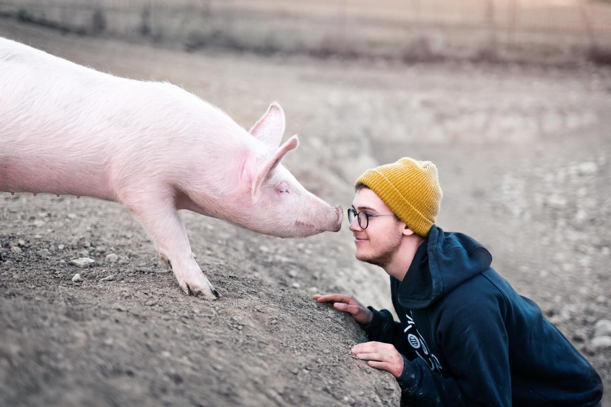 Nueva legislación en el Reino Unido busca reconocer a los animales como seres sensitivos