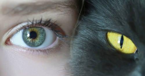 Los gatos son capaces de distinguir buenas de malas personas
