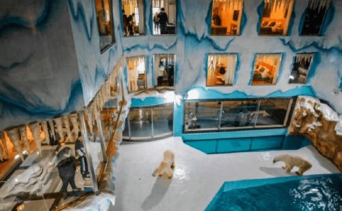 ¡Repudiable! Inauguran hotel en China que exhibe osos polares para entr