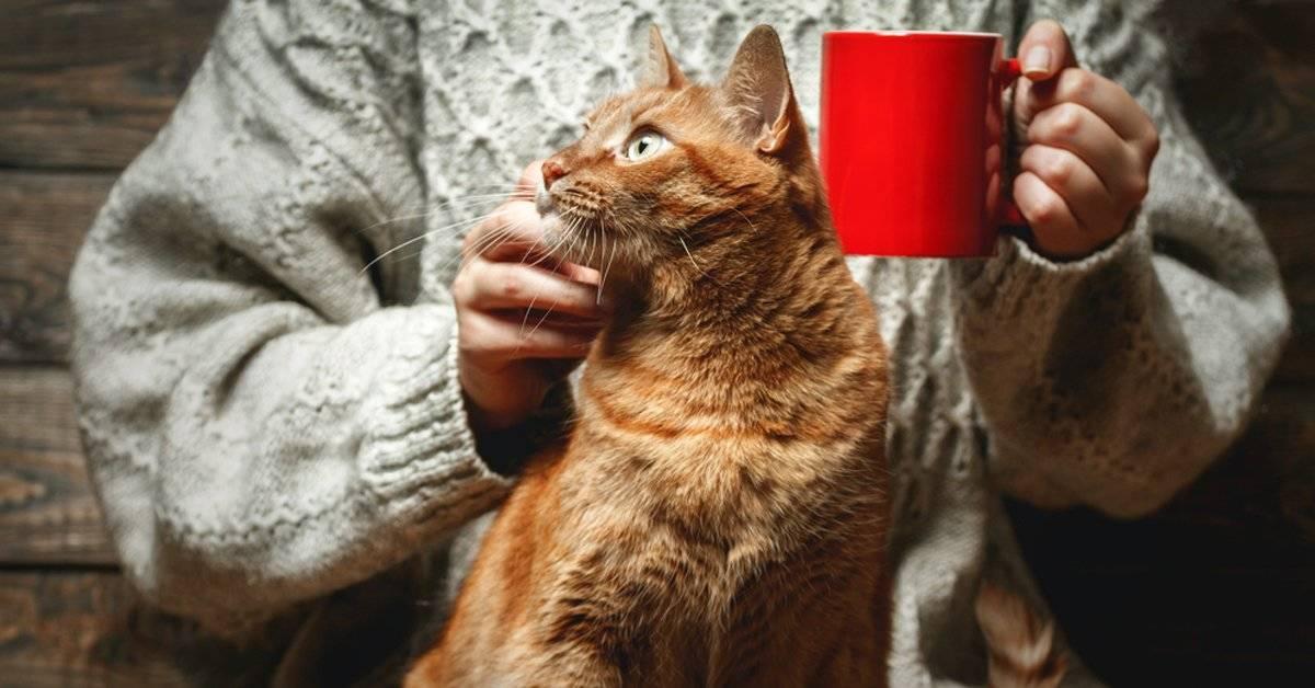 En estos lugares del mundo, ¡el café se toma con gatitos!