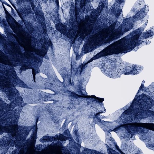 seaweed_1689419i