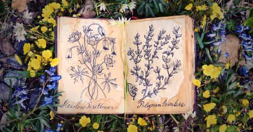Floriografía: el lenguaje secreto de las flores