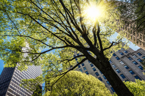 Por qué los árboles deberían ser un tema de salud pública