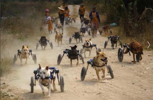 Este refugio animal ayuda a perritos con discapacidad a volver a disfrutar de un paseo