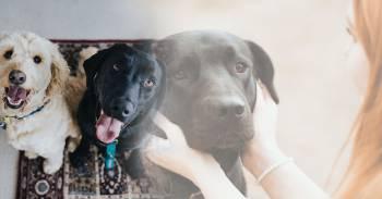 Estudio demuestra que los perros pueden detectar con precisión el cáncer en la sangre