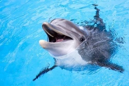 """Detectan una """"conversación humana entre delfines"""" que cambia lo que sabíamos.."""
