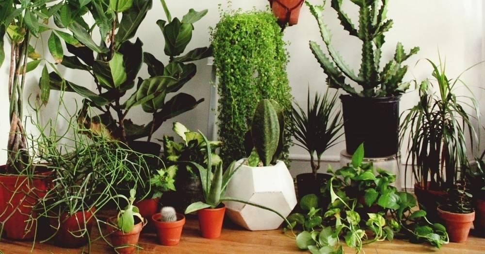 7 consejos para cuidar las plantas de interior